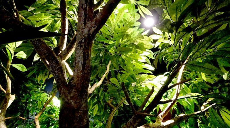 โครงการ ป่าในกรุง